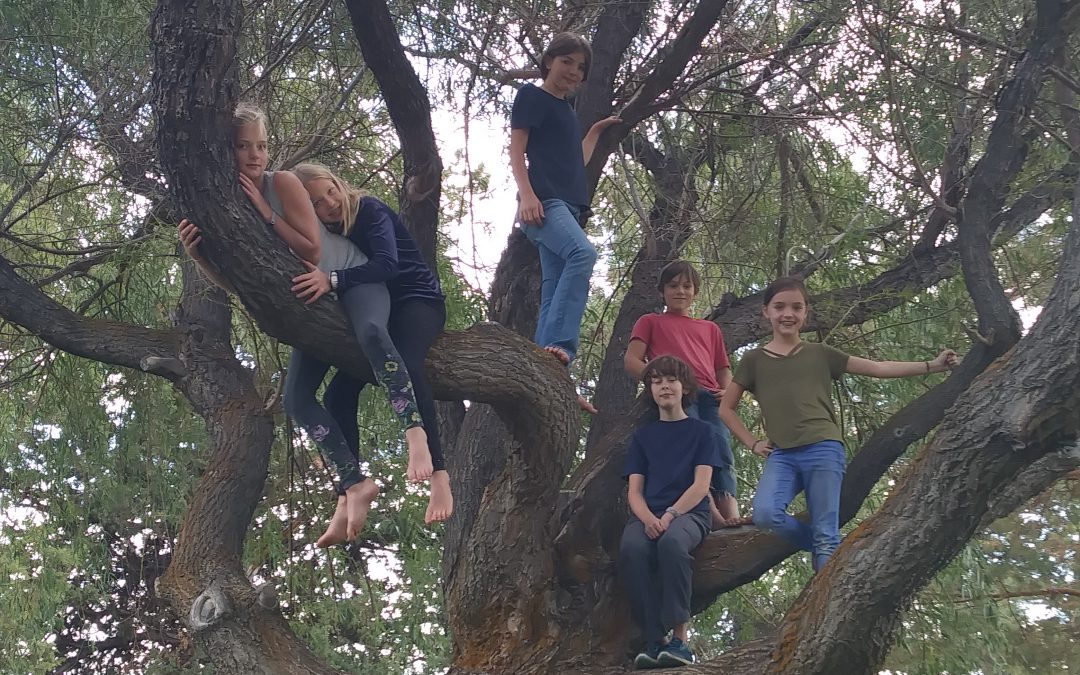 5th grade curriculum highlight – Botany